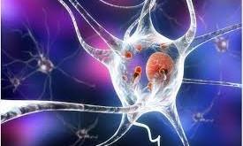 Predicting Neurodegenerative diseases: Parkinson's disease case
