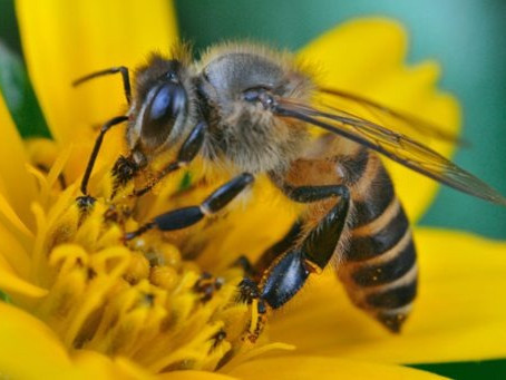 3 Ways Declining the Population of HONEY BEES Can RESURRECT Bloodborne Character and More!