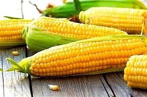 Sweet Corn Season has arrived!