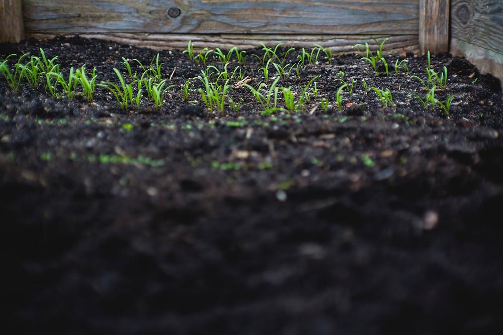 Photo by Markus Spiske on Unsplash: green grass sprouting in dark soil by fence