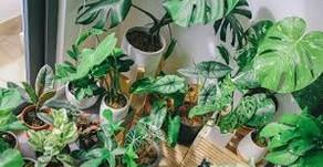 Disease Detection in Plants.