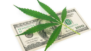 Want to invest in Cannibis? Here are the questions to ask...