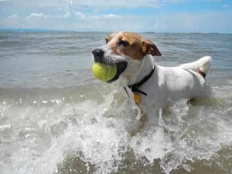 5 de las mejores playas a dónde puedes viajar con tu mascota