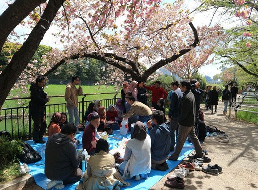 HANAMI, Budaya Silaturahim ala Jepang di Bawah Pohon Sakura