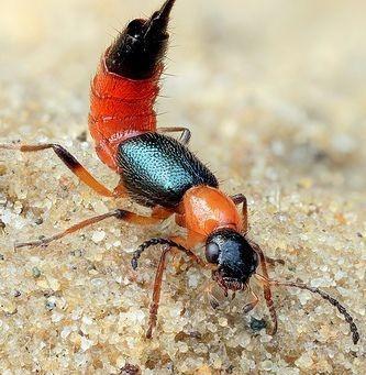 แมลงมีพิษที่มากับสายฝน
