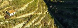Vignes en pente de la Vallée du Rhône