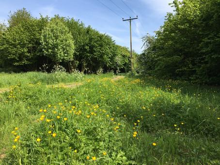 Progress in Grange Wood