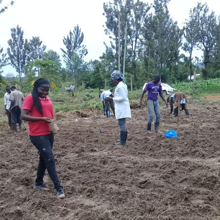 Field trials on diversified farming for better soils in Teso South, Kenya