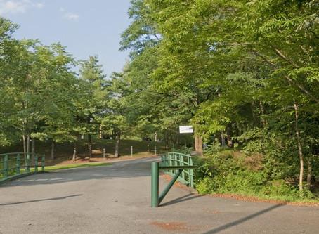 Urban Foraging at Christian Herter Park