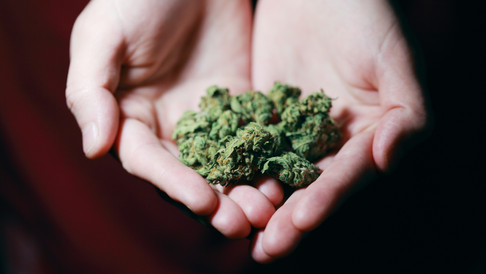 Can Cannabis Change the World?