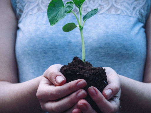 Cultivate Virtue Through Imagination
