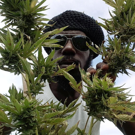 Kingston, Jamaica's Rising Star:  Natral Lbs Is An International Reggae Recording Artist, Producer