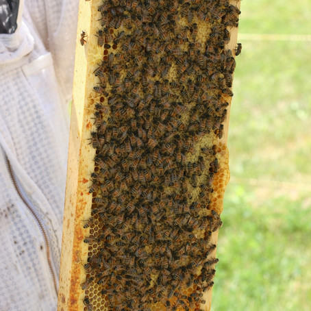 Propolis: A Sticky Subject