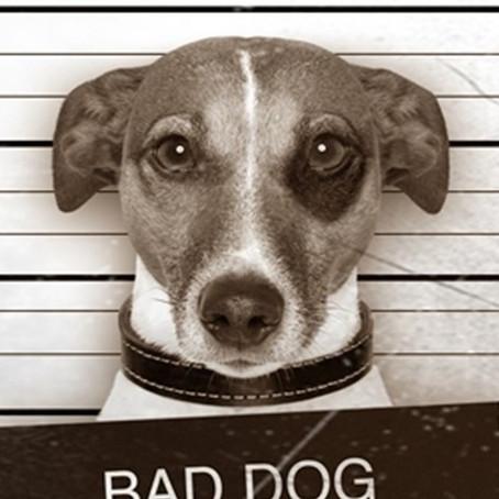 Uma vingança canina em gangue de cachorros