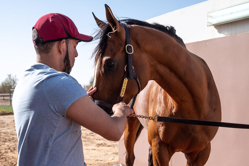 Maximum Security racehorse wins the $20 million Saudi Cup