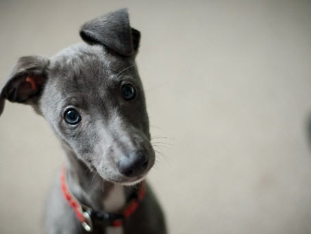 10 Tips For Photographing Puppies and Dogs