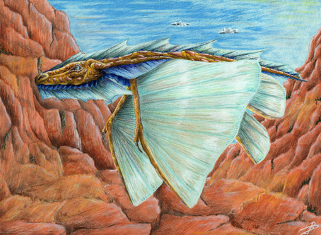 Fauna Encyclopedia : South of Kehvir and Gisswana - Miroirs des Vallons
