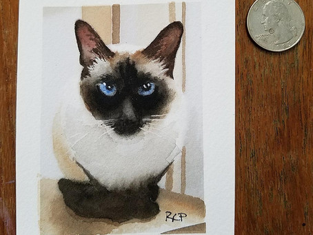 New ACEO Siamese Cat Art and more!