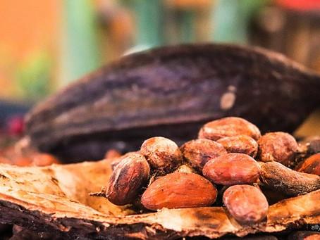 Historia del chocolate de Bayona.