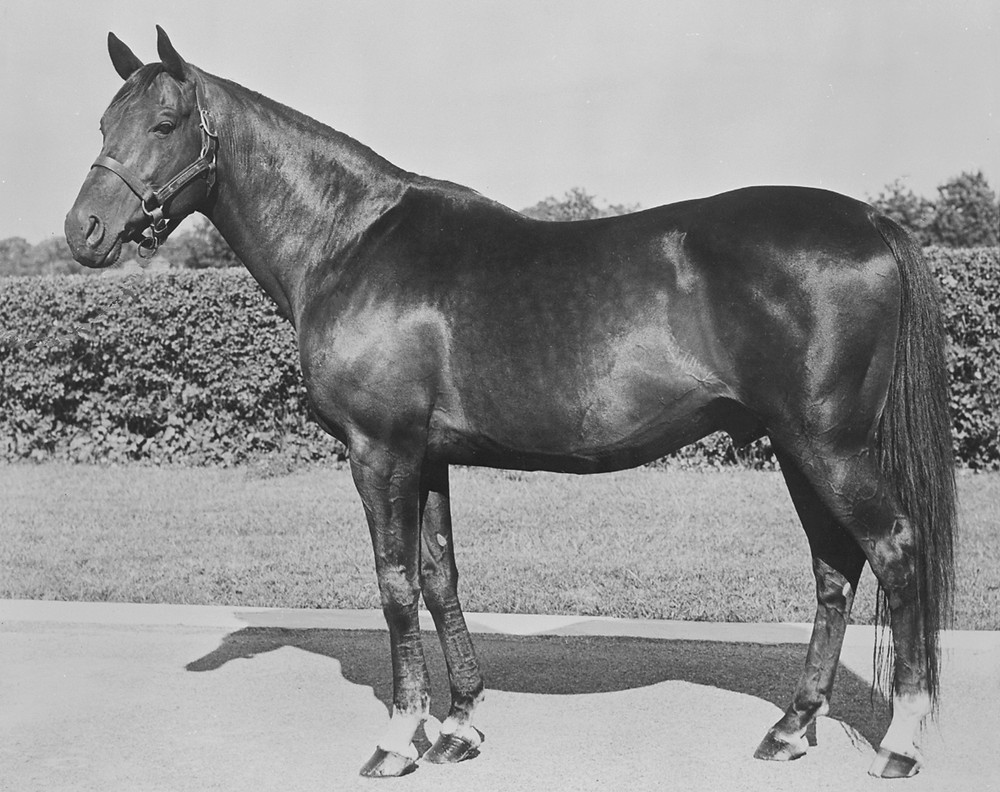 Bull Lea, one of the most influential Thoroughbred sires of all time, at Calumet Farm.