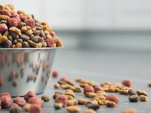 Grain Free Dog Food - The Inside Story