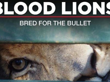 Blood Lions : un regard sur le tourisme de conserve