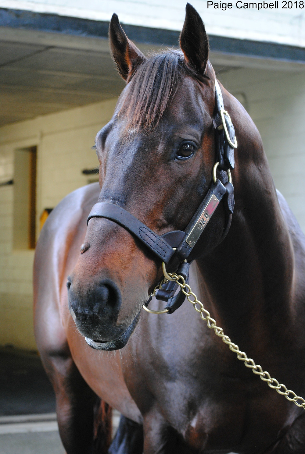Orb, 2013 Kentucky Derby winner, at Claiborne Farm.