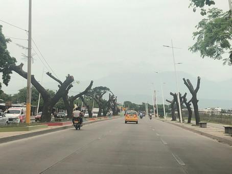 """""""El podado de árboles en Valledupar afecta su reconocimiento como ciudad verde"""": Fundación Proarbol"""