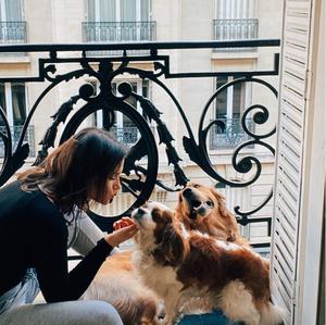 chiens balcon paris