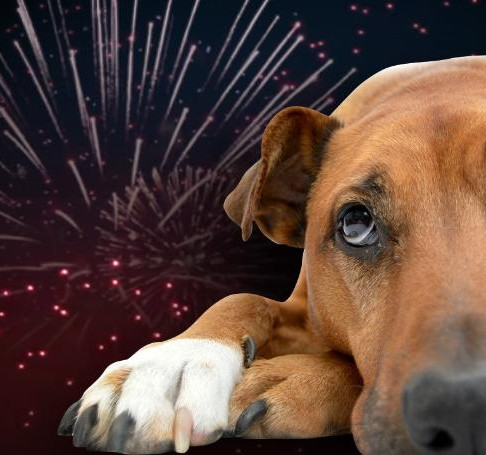 8 Ways to Make Fireworks Suck Less for Your Dog