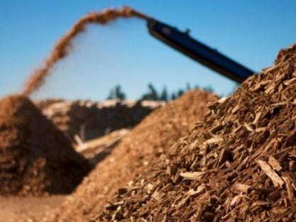 Biomassa: Conheça as principais fontes alternativas de energia e como elas podem ser produzidas