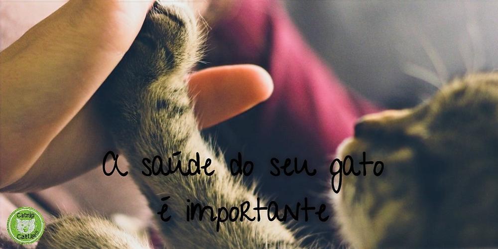 CATNIP CATUP O seu gato merece ser FELIZ! Saiba como um simples brinquedo ajuda a melhorar a saúde do seu gato