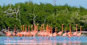 La reserva natural de Rio Lagartos