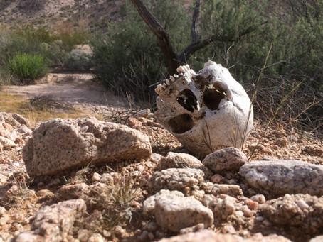 Petrichor: Cabeza Prieta 46 BE Arizona Desert Bighorn Sheep Hunting Part 1