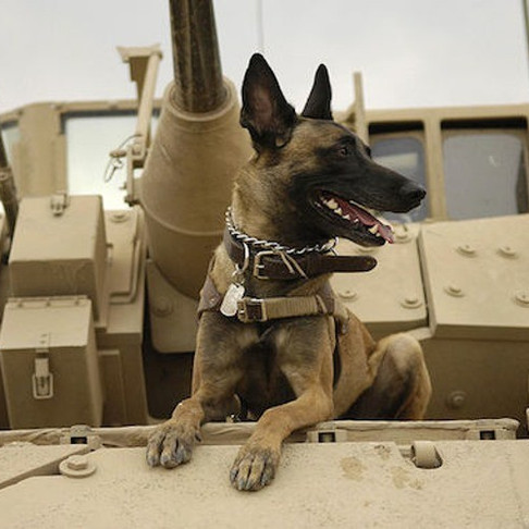Send a Care Package to a Military Dog