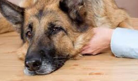 Common Diseases and Prevention for Dogs in the Spring