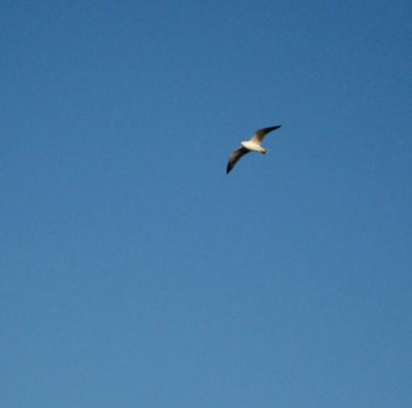 飛べる鳥、飛べない鳥