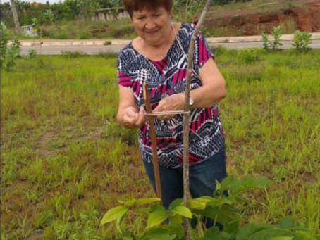 Aposentada planta Ipês pelas ruas de São Luís