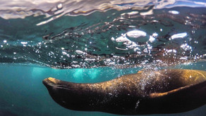 7-day small group Galapagos adventure incl. hotels, transfers, activities from $1075!