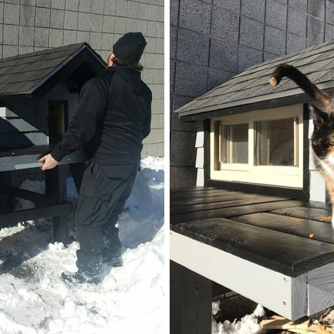 Stray Cat Kept Showing Up at Police Department, So They Built Her a Condo