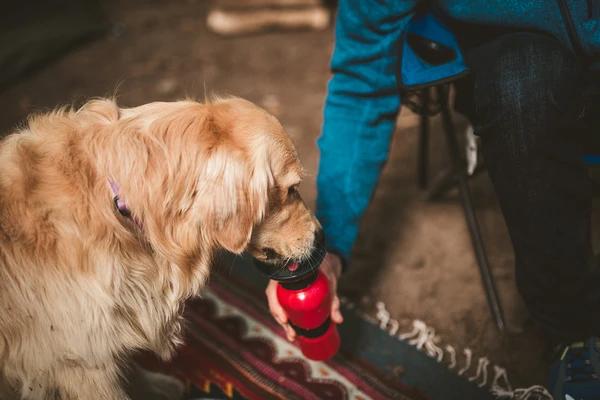 Highwave AutoDogMug - The Best Travel Mug for Dogs