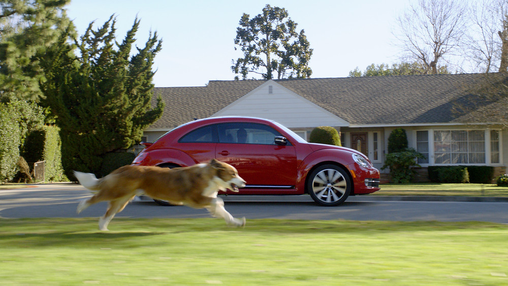 Helpful Tips to Stop Car-chasing Dogs