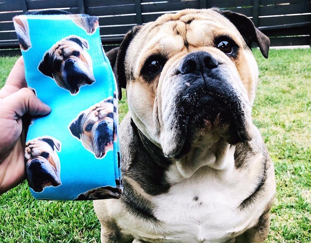 custom bulldog face blue socks