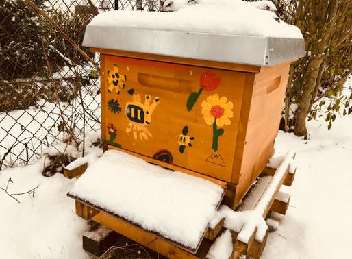Was machen die Bienen im Winter?