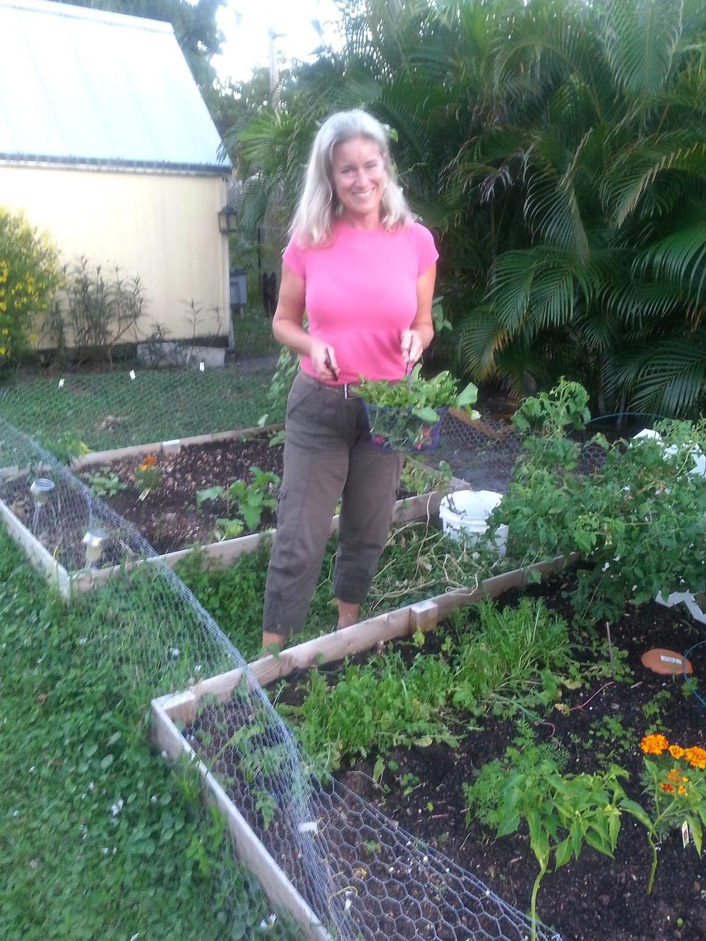Victory Garden in progress