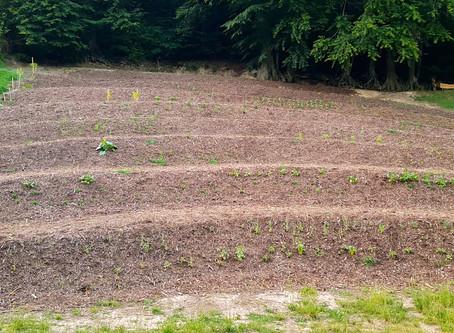 Gewürz- und Heilkräuteranbau - Die Bepflanzung / Spice and medicinal herb cultivation - the planting