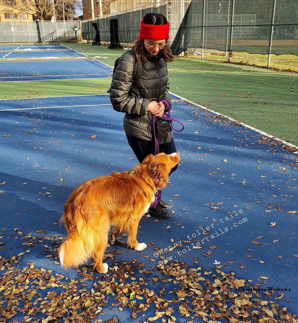 Henry Toller Tails working with dog trainer Follow the eader