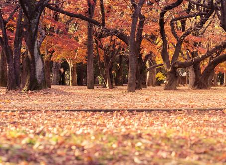 Aaaaahhhh Autumn