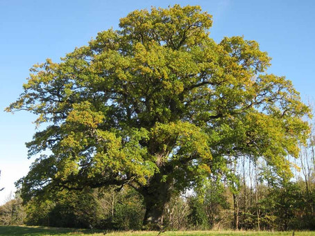 Trädutmaning ska förbättra Helsingborgs luft