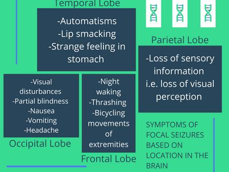 The Science Behind Seizures
